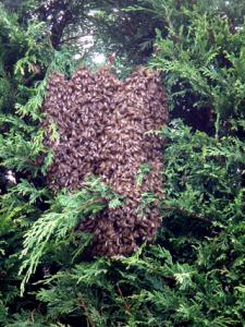 swarm2