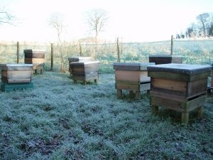 hive-in-frost