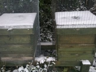 winter-hives